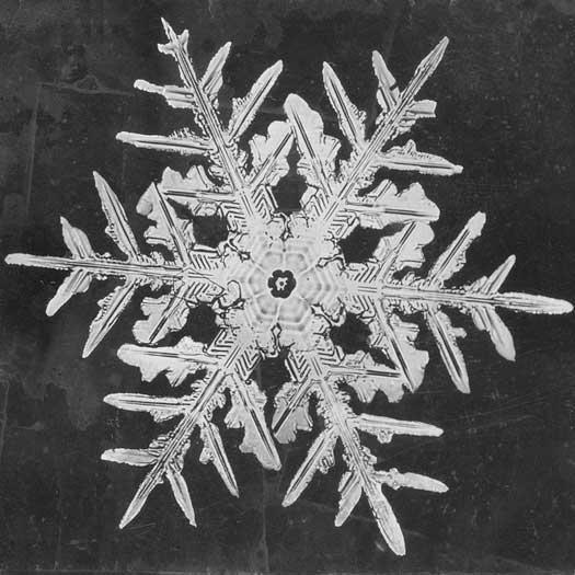 MindBodyPlate Snowflake 3