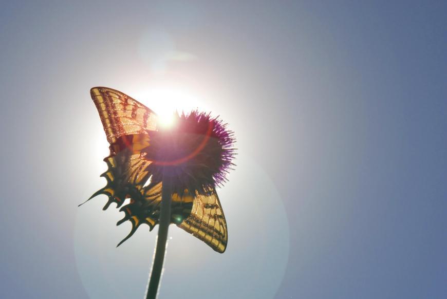 butterfly lens flare - MindBodyPlate